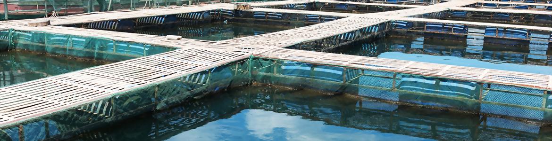 水產飼料供應商 - 升福生技