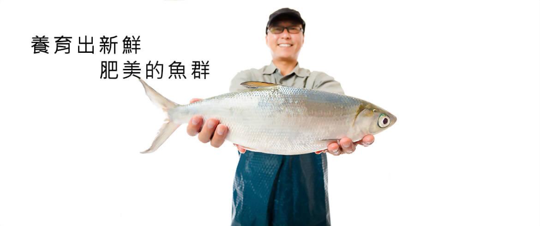 水產飼料推薦 - 升福爰彩票
