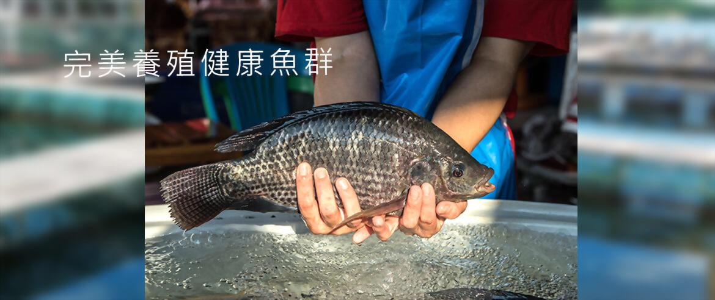 蝦飼料推薦 -  升福爰彩票