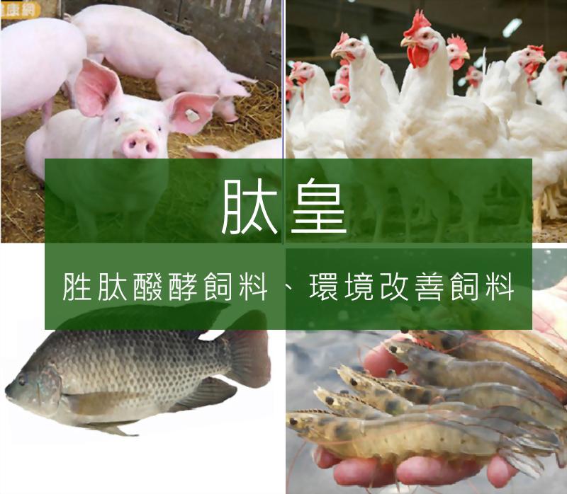 肽皇、胜肽醱酵飼料、環境改善飼料 - 升福生物科技