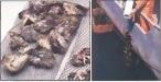 Oyster Net Bag