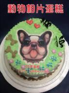 動物相片蛋糕