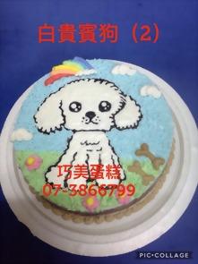 白貴賓狗(2)