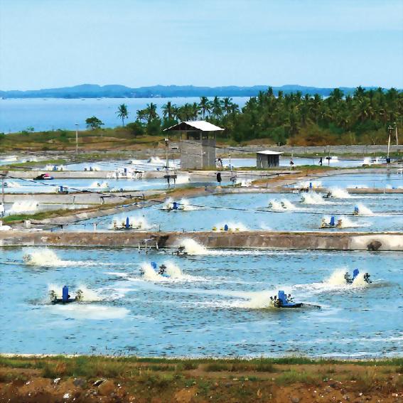 农业/渔业