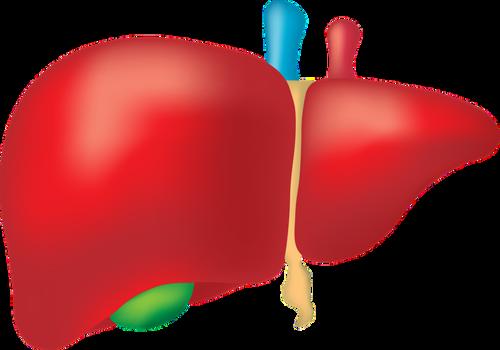 肝功能檢查