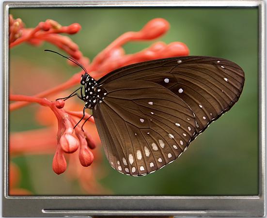 3.50 inch 320x240 TFT Display, BTF035A-AWN$